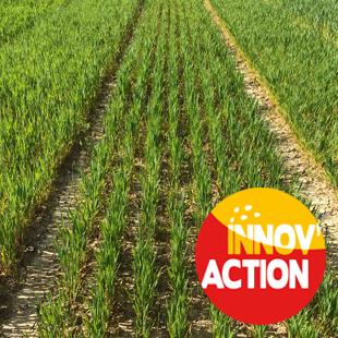 Choix variétaux céréales Bio et innovations en fertilisation organique (27)