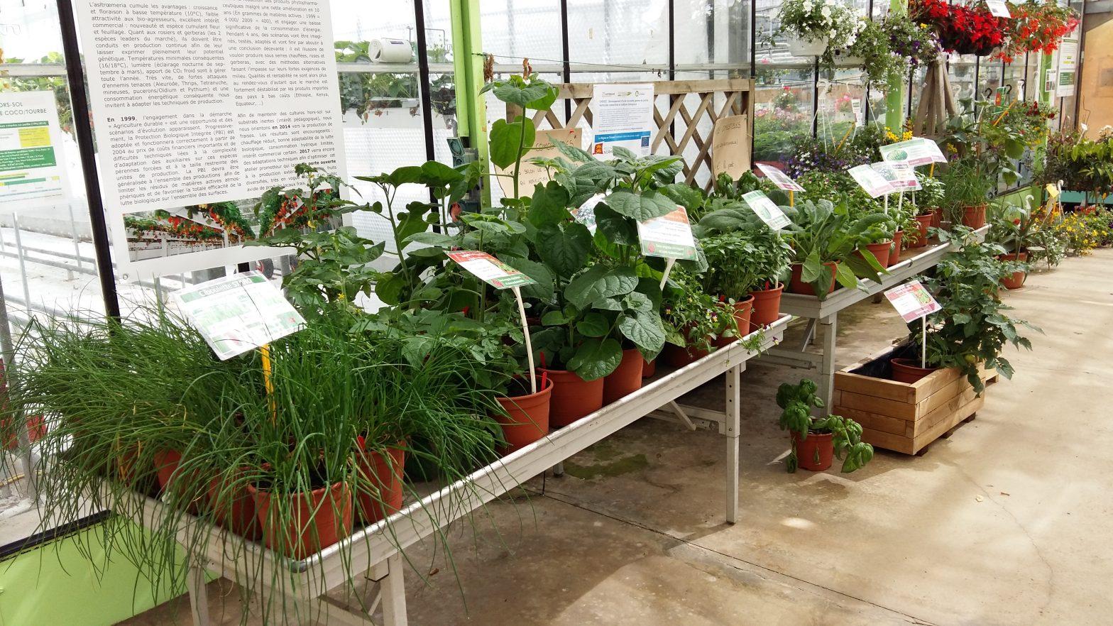 Développement d'une nouvelle gamme de plantes horticoles comestibles en culture biologique - Projet CHOICE