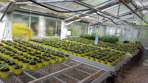Agents de biocontrôle pour lutter contre les pathogènes du sol - Projet BCA Protect