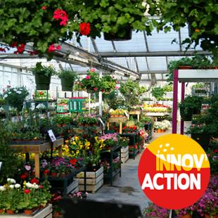 Le paillage des conteneurs en horticulture (14)