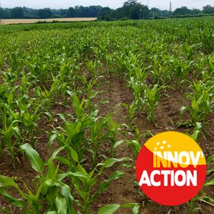 Agriculture de conservation :  comparaison de méthodes de semis du maïs (61)